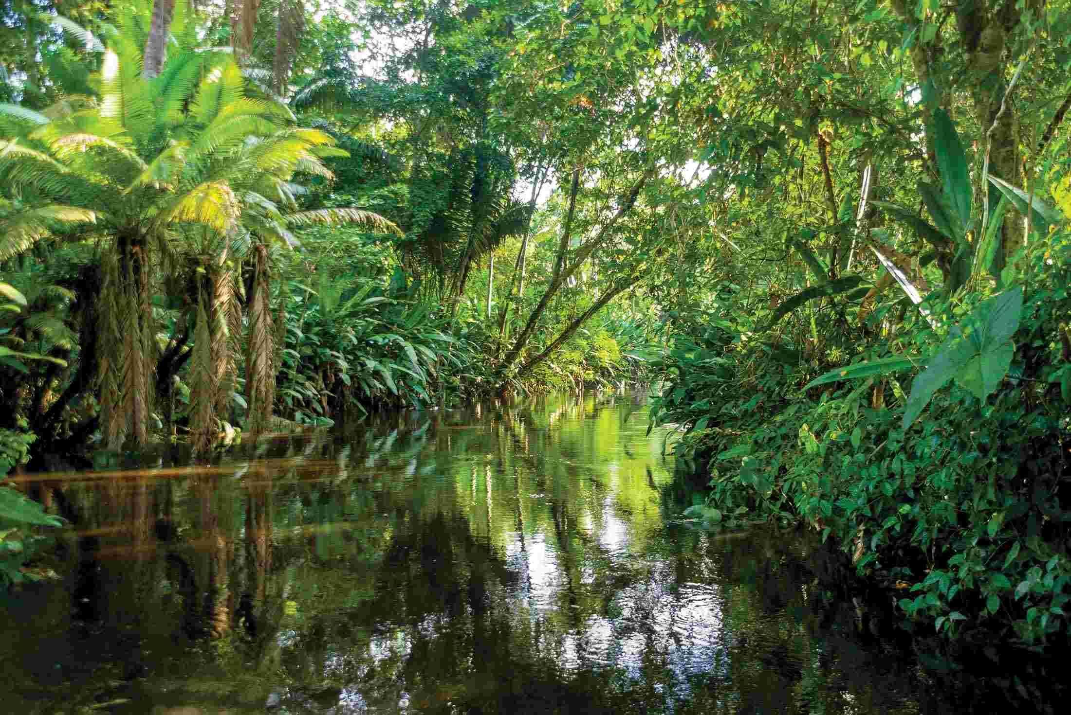 Amazonian Jungle Ecuador Amazon Rainforest Amazon Forest