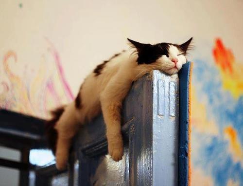 gato na porta