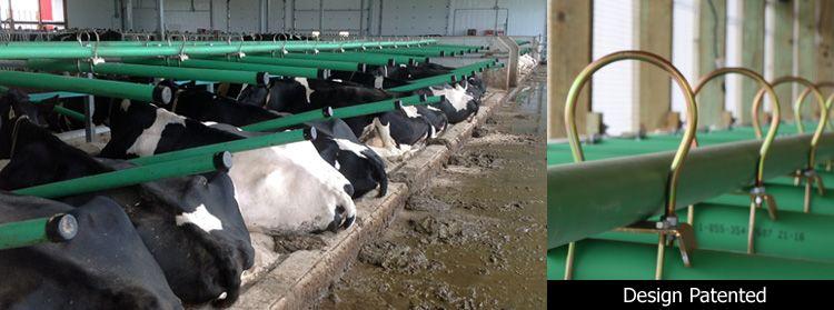 Greenfreestall cattle freestall distributor ontario