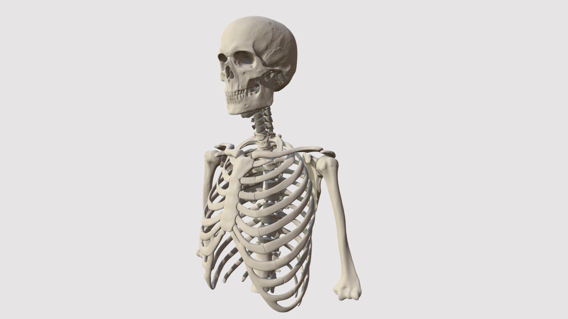 Großzügig Atlas Anatomie Menschliche Körper Ideen - Anatomie Ideen ...