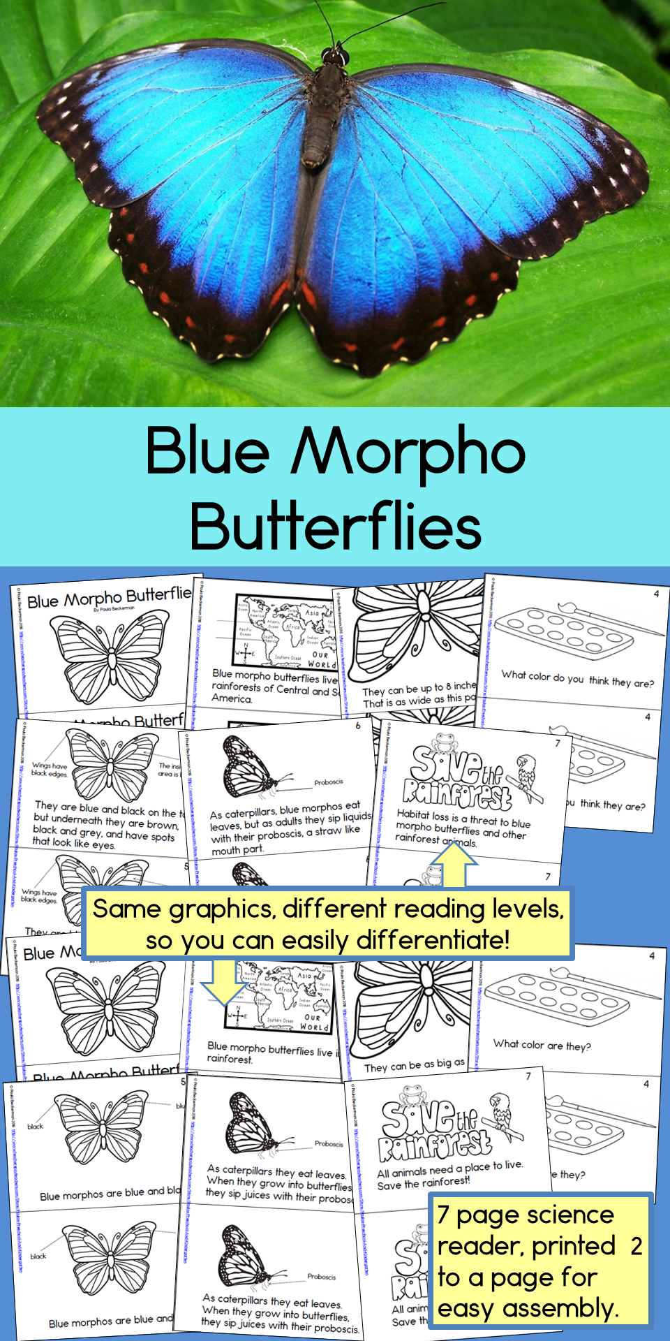Engage Your First Third Grade Students In Non Fiction Reading With These 2 Beautiful Reproducible Reade Guided Reading Books Blue Morpho Butterfly Rainforest [ 1920 x 960 Pixel ]