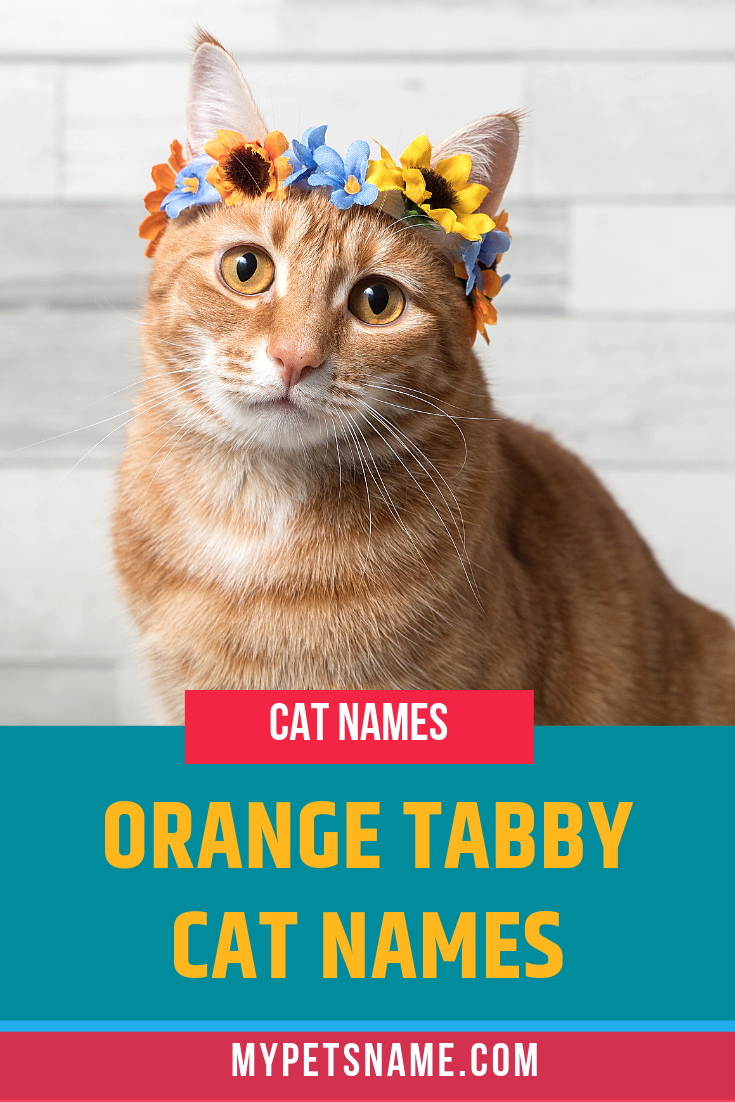 No Matter What Type Of Tabby Cat You Get We Are Here With A List Of The Perfect Orange Tabby Cat Names For Your Ne Tabby Cat Names Cat Names Orange