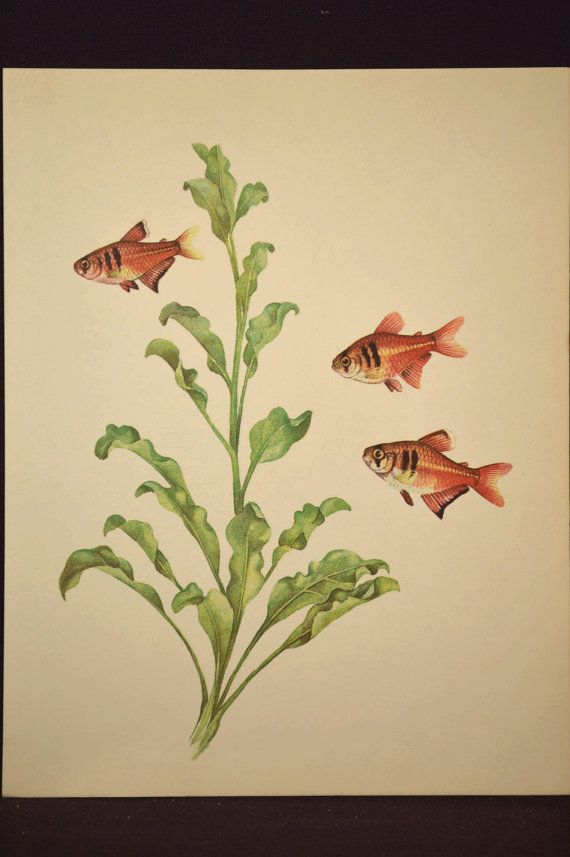 Tropical Fish Art Wall Decor Aquarium Fish Print Aquatic Plant ...