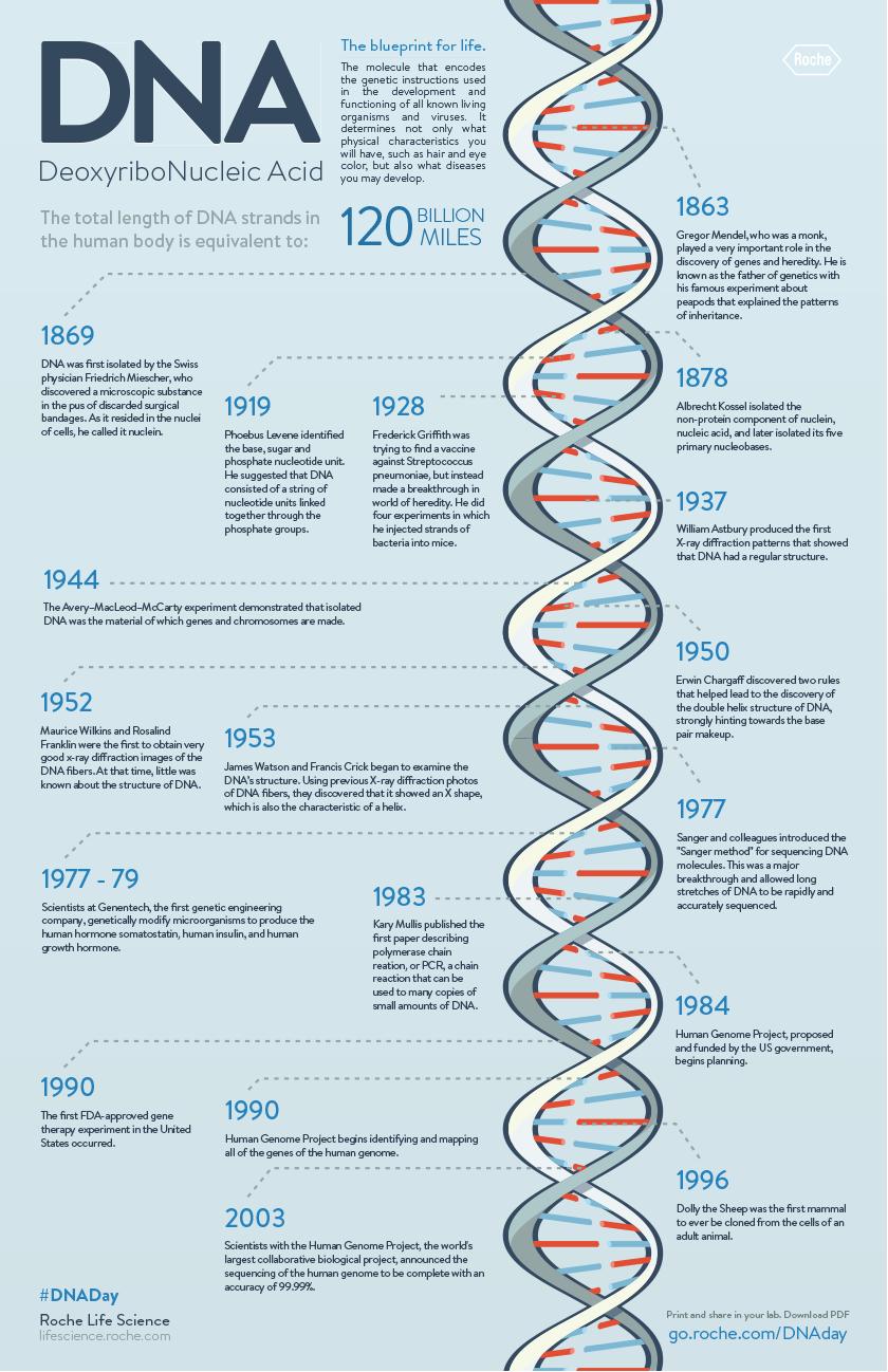 DNA Timeline | Genetics and heredity | Pinterest | Timeline, Life ...