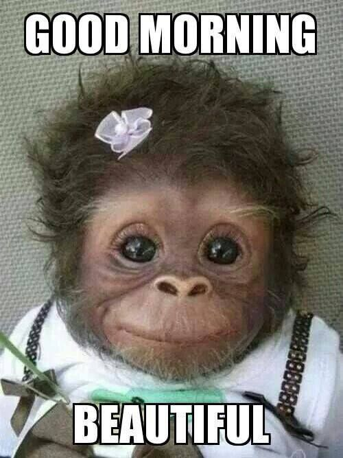 24 Good Morning Beautiful Quotes With Images Cute Baby Monkey
