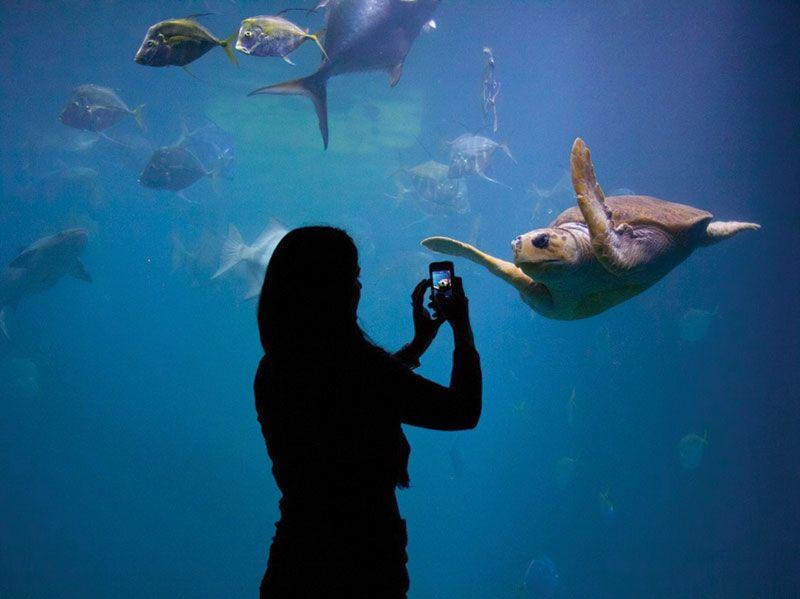 The Virginia Aquarium & Marine and Science Center is a