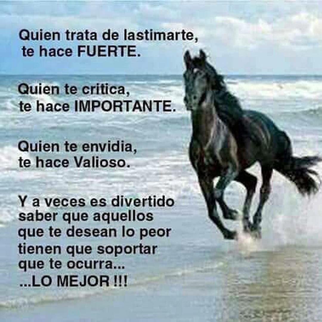 Caballo Energía Motivational Phrases Quotes Y Spanish