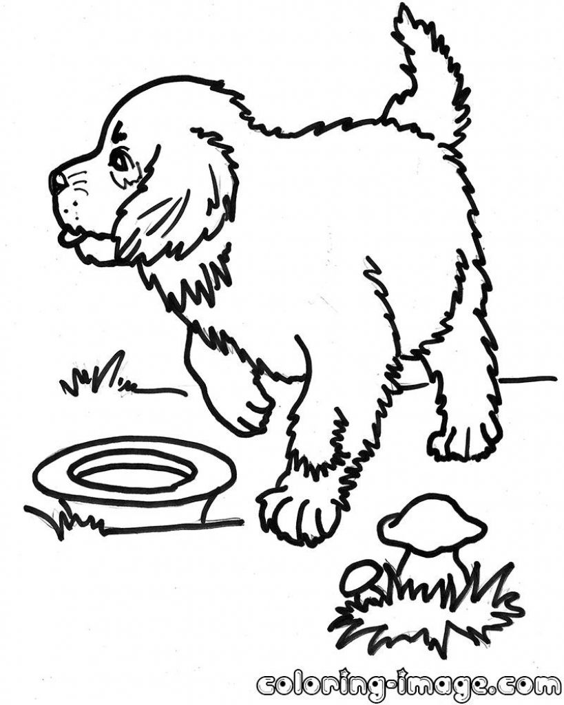 St Bernard Dog Coloring Pages Gallery Dog Coloring Page Animal Coloring Books Animal Coloring Pages