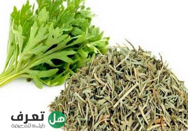Pin By هل تعرف On تغذية In 2021 Herbs Blog Blog Posts