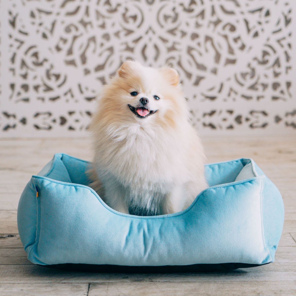 Dog BLUE velvet bed dreamer / Pet bed couch / Plush mat