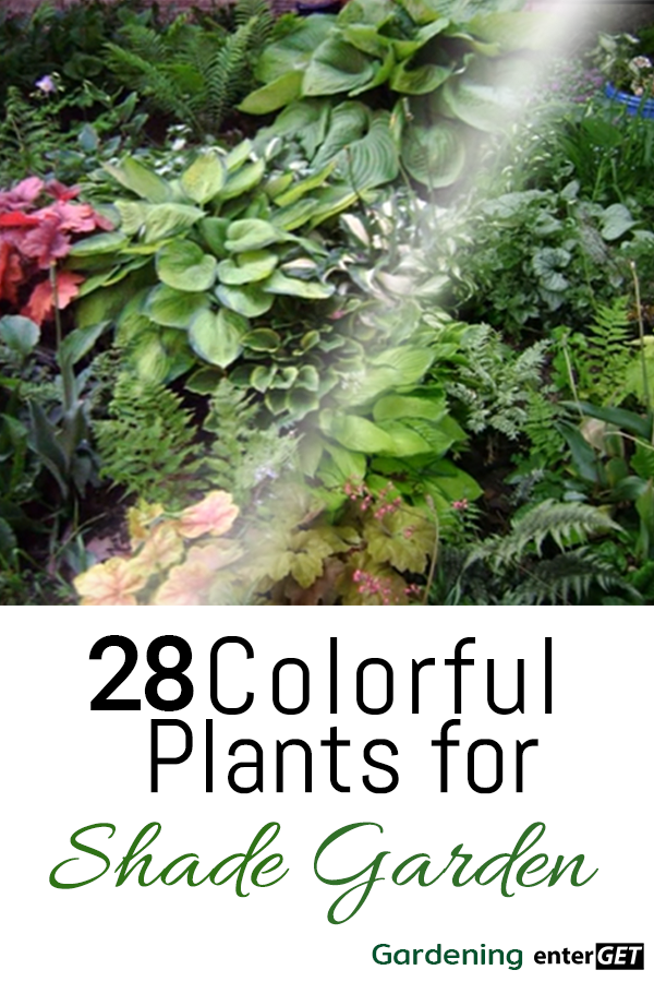 28 Colorful Plants for Shade Gardens #shadeplantsperennial Good shade plants with color that will inject an array of texture and colors into your garden.  Take a look at the selection with details of growing conditions to help get you started with perennial flowers that are low maintenance... #shadeplantsperennial