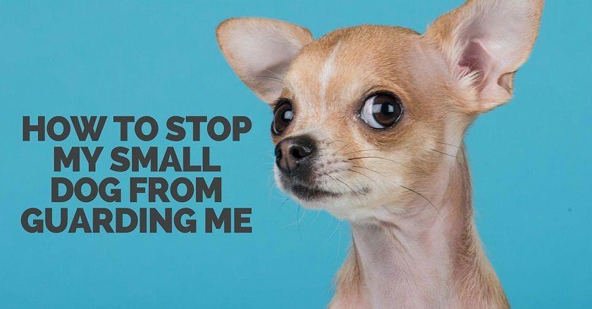 How Ro Train A Dog Dogtrainingquebec 5163386015