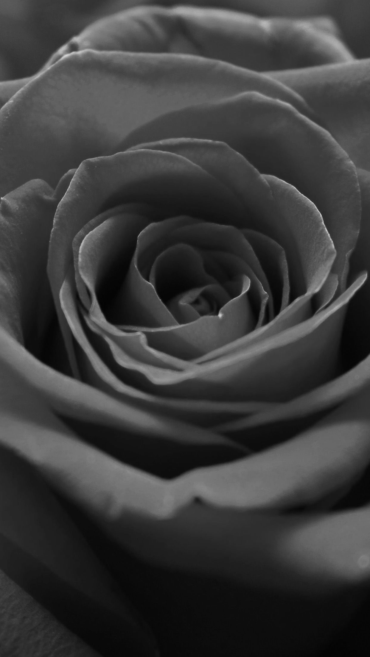 Black And White Macro Rose Flower Grey Dark Android Wallpaper