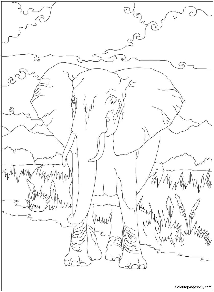 African Bush Elephant Coloring Page Coloring Pages Elephant Coloring Page Coloring Pages Nature