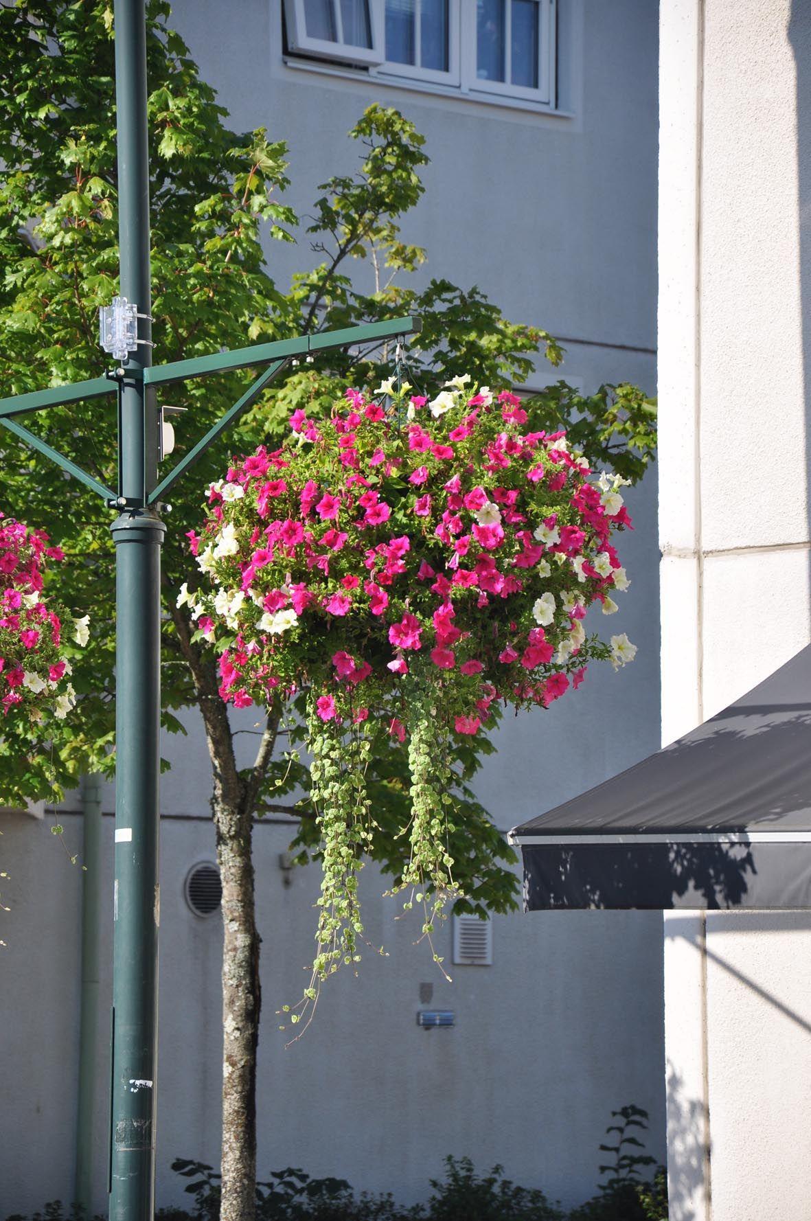 Cestos colgantes en farolas fachadas m stiles - Farolas para jardin ...