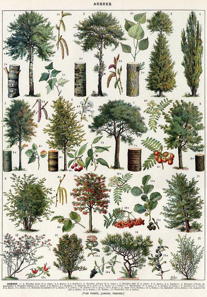arbres-couleurs-1