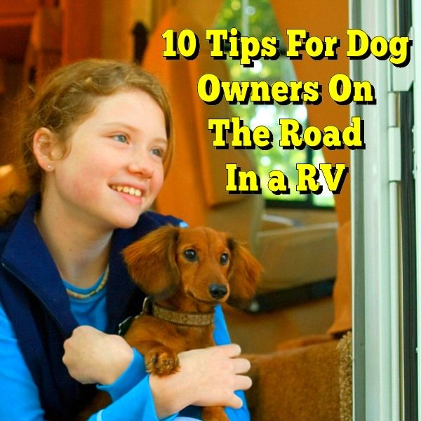 Ten Tips For Dog Owners On The Road In A Rv Taking A Rv Trip With