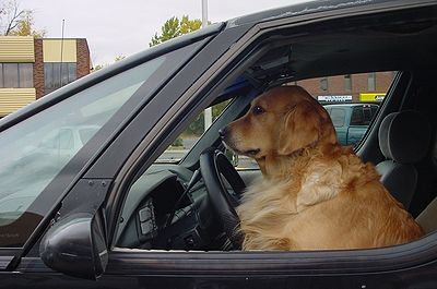 Shelter Dogs Learn To Drive Shelter Dogs Dogs Real Dog