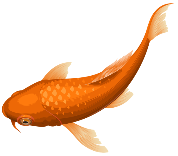 Orange Koi Fish Transparent Clip Art Png Image Koi Fish Drawing Orange Koi Fish Silhouette