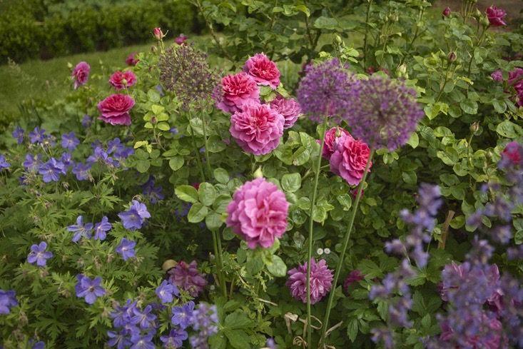 charlotte-fidler-gardenista-11-photo-jim-powell-1.jpg 733×489 pixels