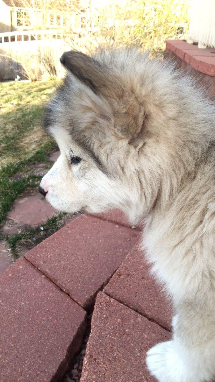 Pin By Kim Blaschke Felser On Animals Big Dogs Baby Animals Cute Puppies