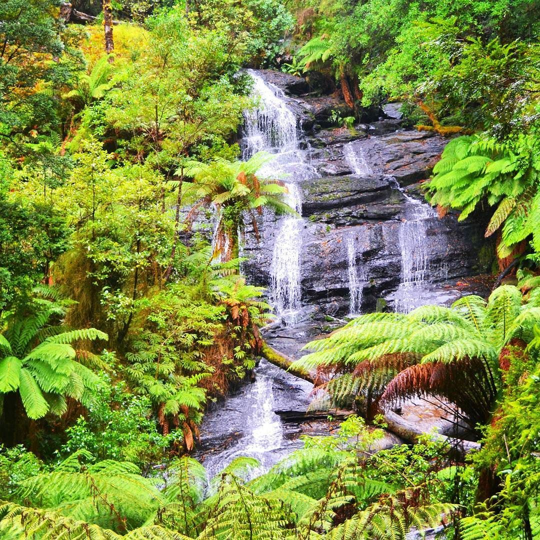 Temperate rain forest with a lot of rain - we like to have it authentic!  #rainforest #sun #summer #greatoceanroad #fun #australia #rain #view #blue #goodtimes #nature #lonelyplanet #sky #trip #holiday #exploring #descover #vegan #travelling #backpacker #sightseeing #tourist #instapassport #naturelovers #beautifuldestinations #instagood #instatravel #wildlife #plants by jennislifeandtravels http://ift.tt/1ijk11S
