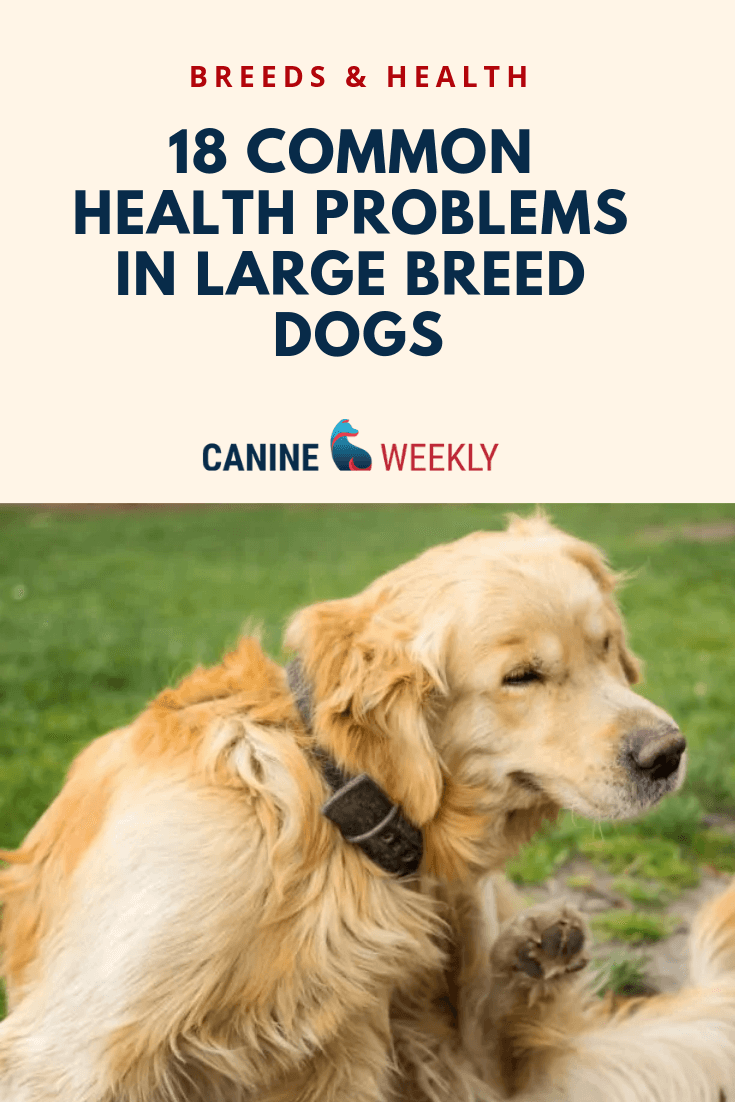 az of dog diseases and common health problems