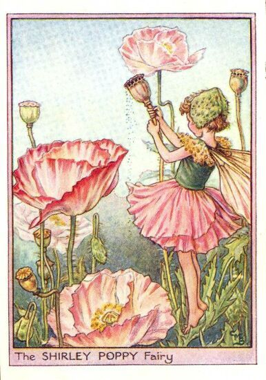 I love poppies, and I love fairies.  I really like the flower fairies by Cicely Mary Barker.  Her images really inspire the imagination.