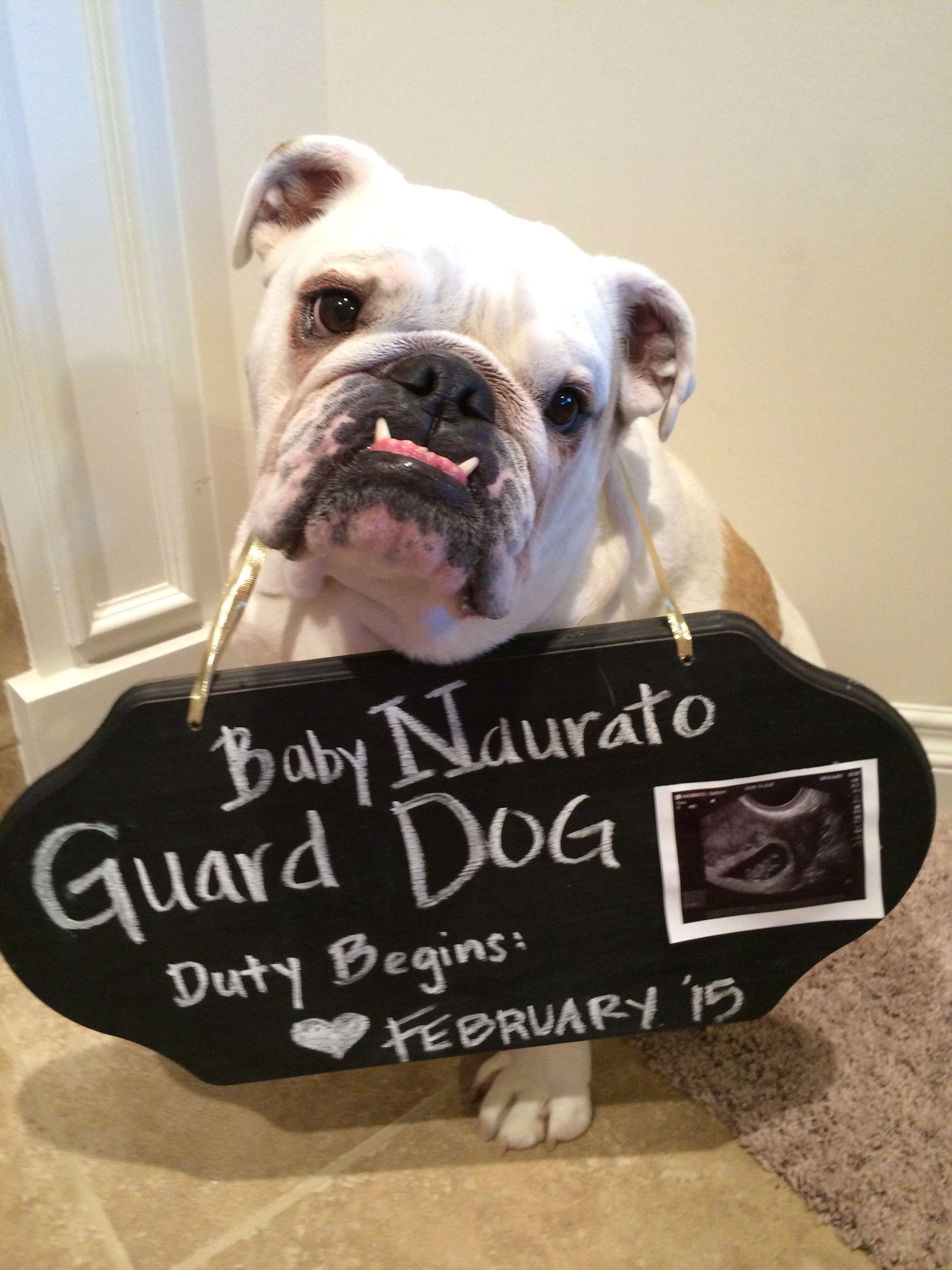 Newborn Baby Bulldogs : newborn, bulldogs, Teddy, English, Bulldog, Bodysuit, Shirt, Newborn
