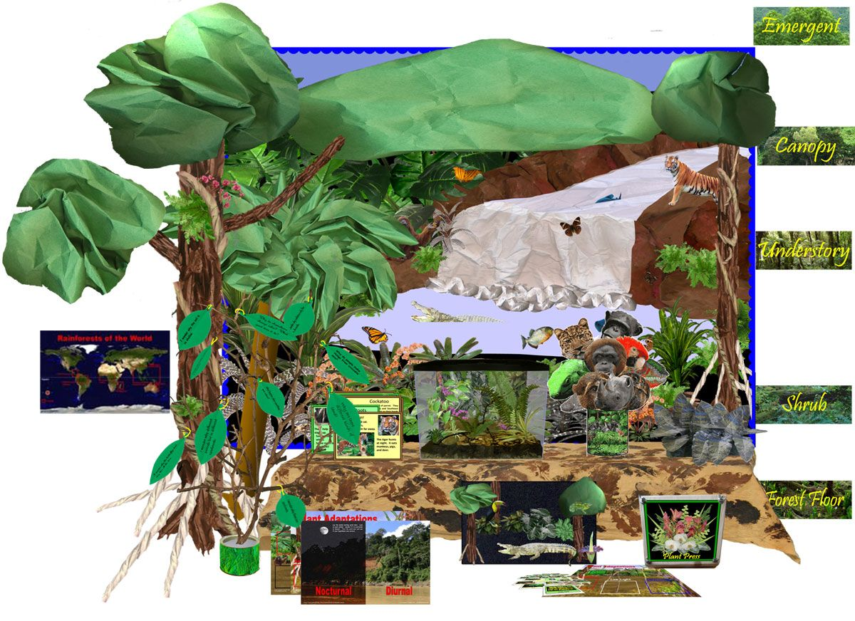 A Classroom Museum For Student Exploration Of The Plants