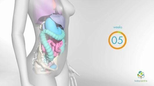 Embarazo: 5 datos sobre el movimiento del bebé | Embarazo ...