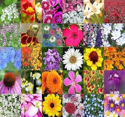 30 types Wildflower Flower MIX Seeds  Wildflower Mix 100 seed  FRESH SEEDS ** Continue to the product at the image link.