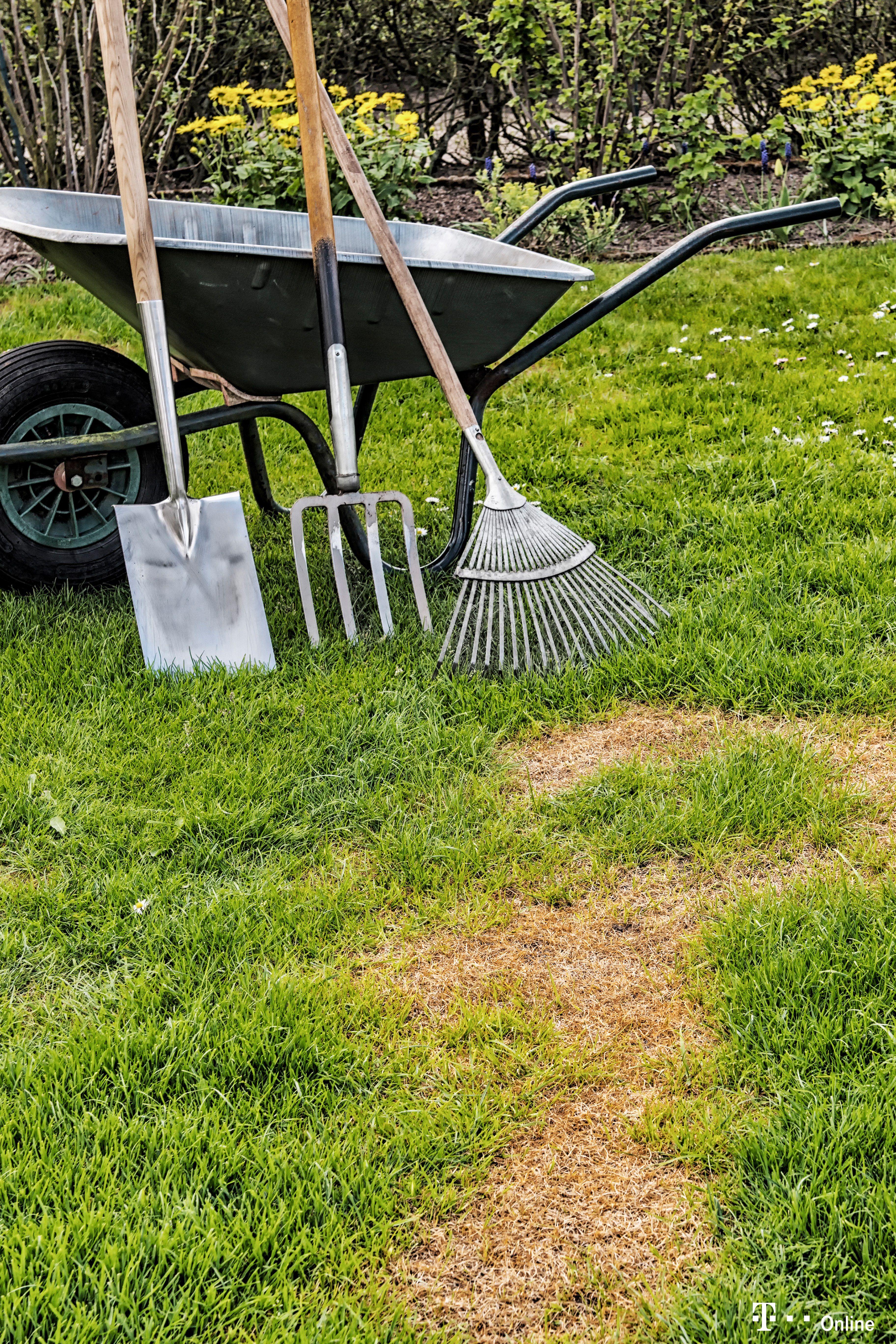 Fehler Beim Vertikutieren Machen Den Rasen Kaputt Garten Terasse