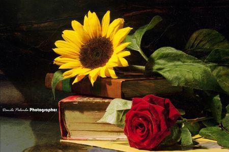 Rose And Sunflower Desktop Nexus Wallpapers Sunflowers And Roses Rose Flower Wallpaper Rose Wallpaper