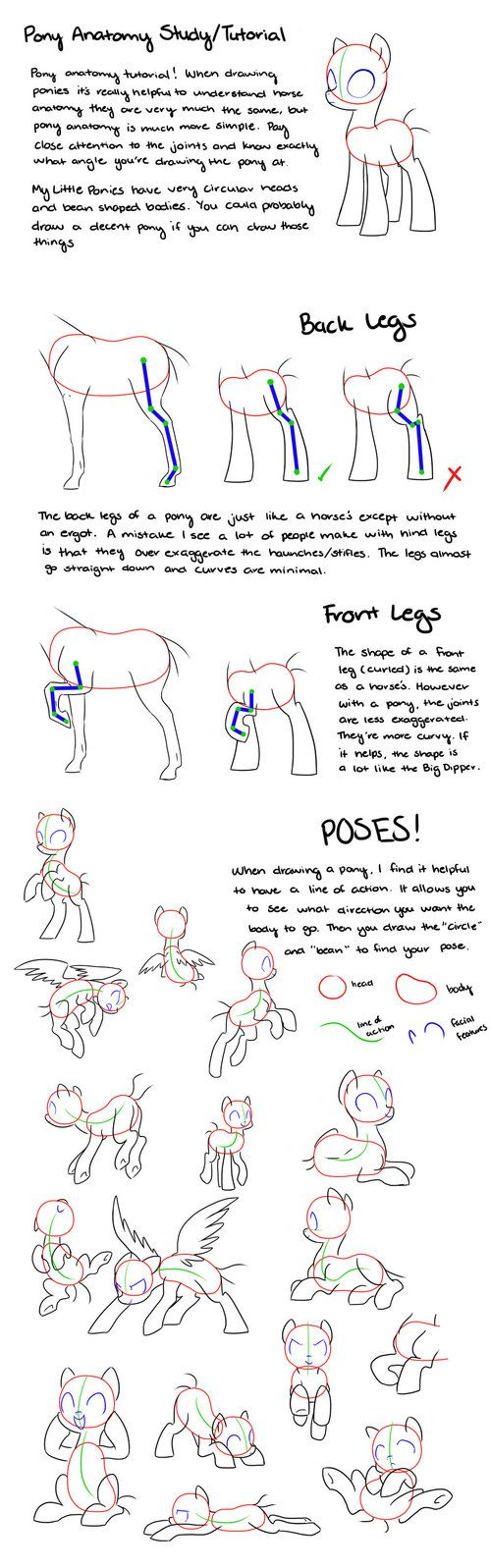Pony Anatomy Tipsstudytutorial How To Draw Mlp Pinterest
