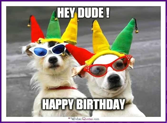 Happy Birthday Memes With Funny Cats Dogs And Animals With