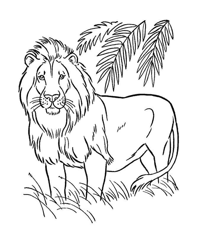 Animals Com Imagens Leao Para Colorir Animais Para Colorir