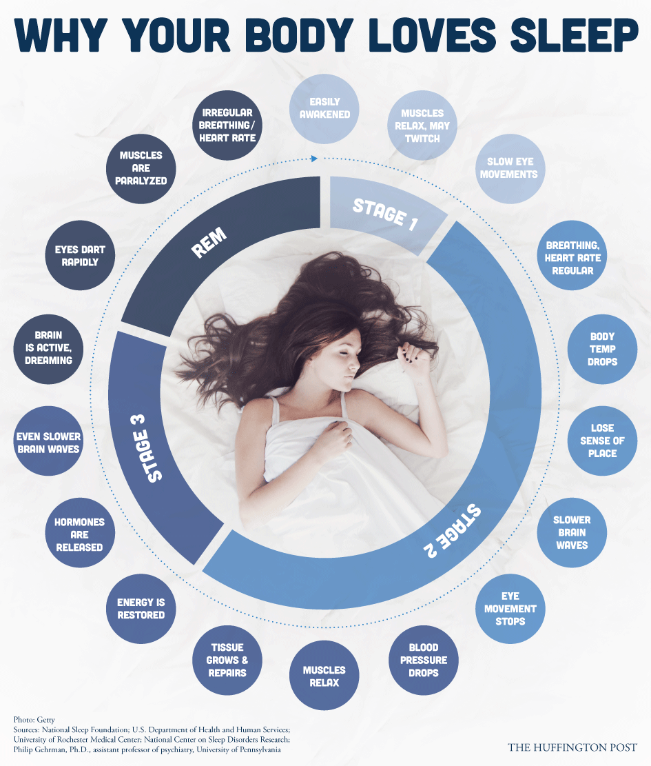 How To Fall Asleep When Jittery By Aghmati Have You Ever Wondered What  Happens To Your Body While You Sleep? #sleepfacts #