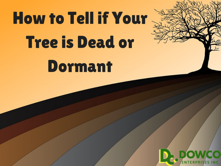 How To Tell If Your Tree Is Dead Or Dormant St Louis Dowco Enterprises Inc Landscape Maintenance Lawn And Landscape Plant Health