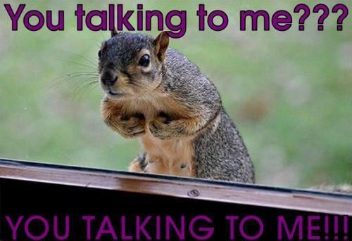 Are You Talking To Me Scarface Very Funny Funny Animal