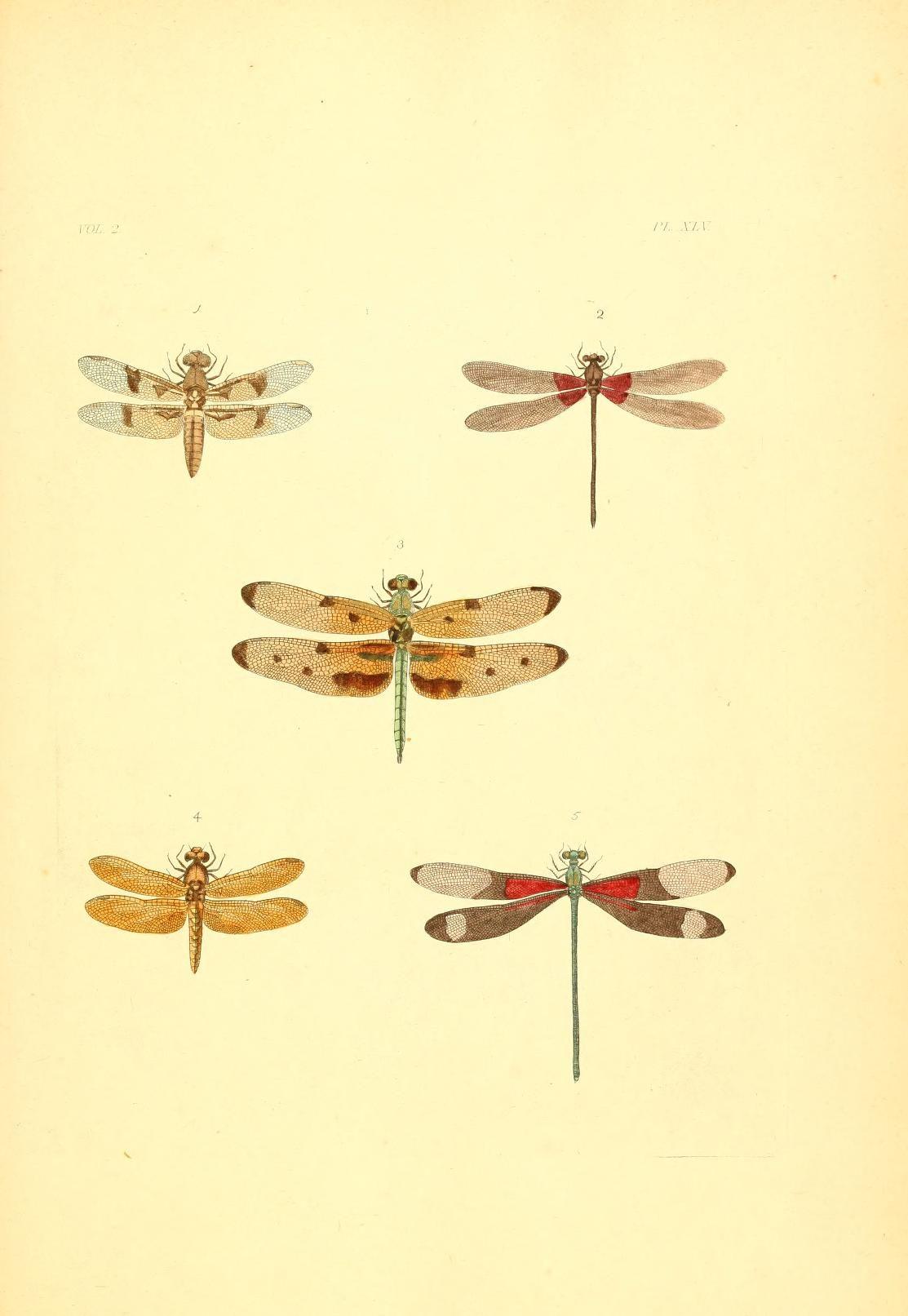 v. 1-3 (1837) plates - Illustrations of exotic entomology ...