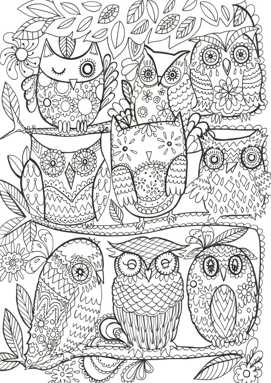 Pin de nurit leshed en Owl | Pinterest