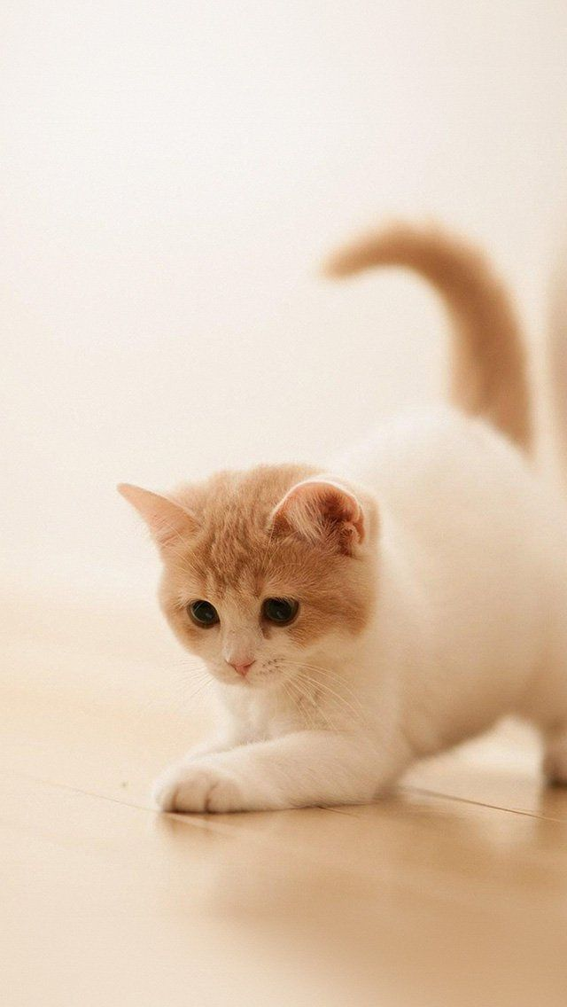 Cute Cat Kitten Animal Iphone 5s Wallpaper Download Iphone Wallpapers Ipad Wallpapers One Stop Download Cute Cats And Kittens Cute Cat Cute Animals