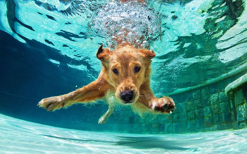 In Home Hydrotherapy 40 Swim 4 Pack Dip N Dogs Blog Dog Breeds Popular Dog Breeds Retriever Dog