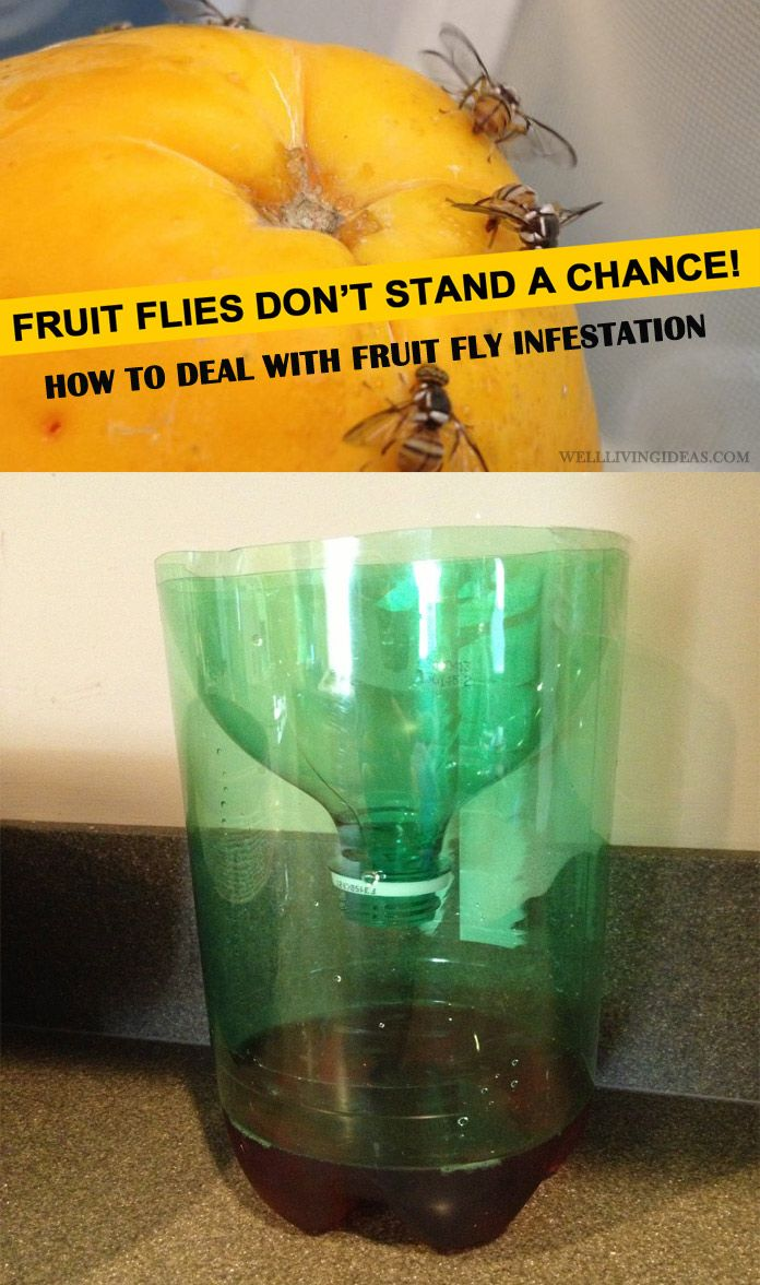 best home solutions for getting rid of fruit fly infestation in