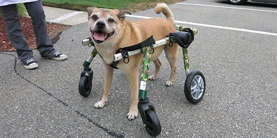 Full Support Medium Dog Wheelchairs Walkin Wheels Dog