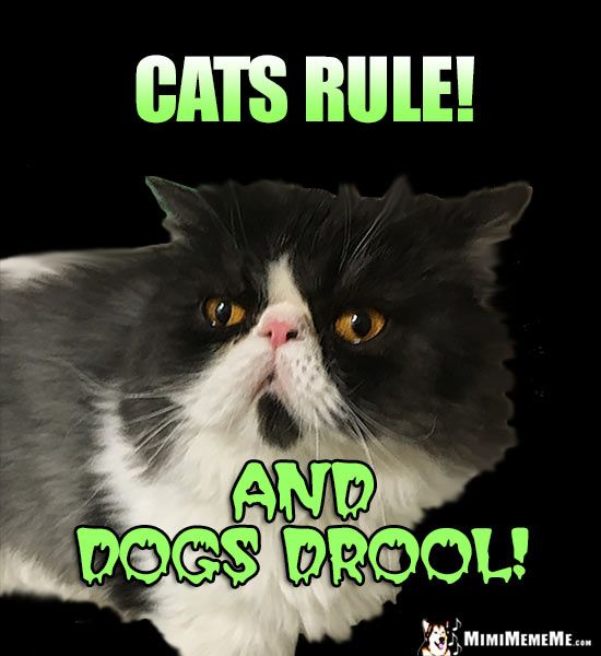 Funny Cat Says Cats Rule And Dogs Drool Cat Jokes Funny Cats