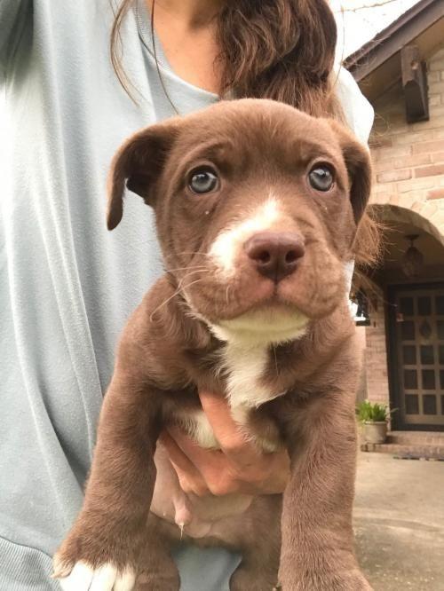 This Cutie Needs A Home Dachshund Labrador Retriever Mixed