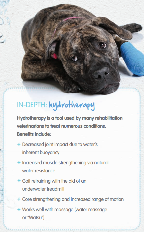 5 Benefits Of Hydrotherapy For Pets Pet Care Activities Pet Insurance Cost Dog Food Online