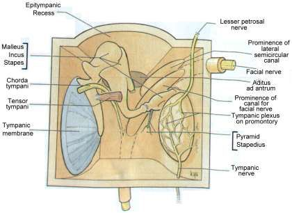 middle ear anatomy - Google Search | Audiology | Pinterest | Middle ...